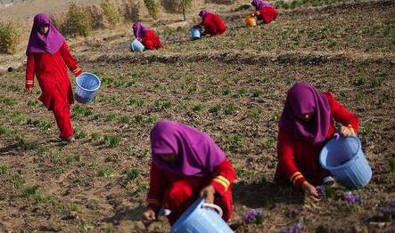 musulmanas trabajan