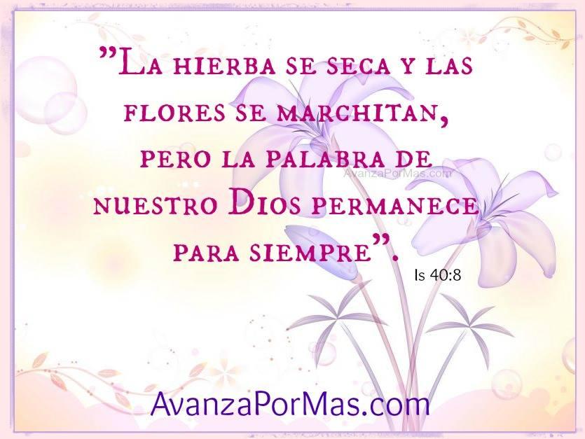 Imagen La Hierba Se Seca Y Las Flores Se Marchitan Imagenes