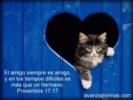 imagenes cristianas con animales